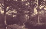 GENCK = L'allée DesChênes (Nels) 1921 - Genk