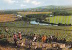 19408 Vendanges En Champagne, Au Dessus Meandres Marne, Epernay. France. éd ESTEL Raisin Vigne