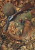 19433 Tableau De Chasse. 27007E Publistar. Fusil Faisan - Chasse