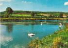 19466 Gamaches : étang à Voile On Y  Pêche Aussi.  Yvon 10.6083 Cygne Pecheur