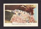 ANIMAUX - OISEAUX - BIRDS - PUFFINS AND MURRS - PERROQUETS ET MARMETTES - SUR L´ILE BONAVENTURE - PERCÉ - GASPÉ - Oiseaux
