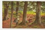 D7182 - Paysage - Forêt - Cartes Postales