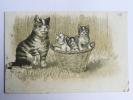 Chatte Et Ses Chatons Dans Un Panier - Chats