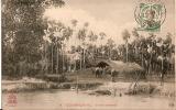 Cochinchine-Ferme Annamite  A2 - Viêt-Nam