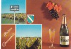 19581 Plaisirs Champenois, Route Champagne, Scenes De Vendanges. La Cigogne 51.000.104.A3 Route - Vignes