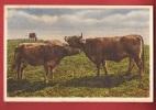 N502 Vaches Au Champ. Non Circulé. Photoglob E 33 - Vaches