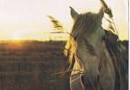 Cheval / Paard - Pferde