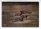 AFRIQUE (AFRICA) - BENIN (ex DAHOMEY AOF)  Hippopotame - Hippopotamus - CPSM-CPM - Benin