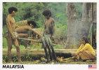Postcard Malaysia Orang Asli Indigenous People - Ohne Zuordnung