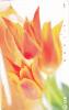 Telephone Card Japan - Japon : Tulips  NTT - Japan