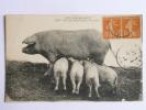 Nos CAMPAGNES - Une Heureuse Petite Famille - Cochons