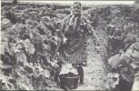 FRANCE:Vendanges:La Mère Juliette, Vendangeuse-coupeuse à Montluois-sur-Loire.- Reproduction D´une Ancienne Carte Photo. - Vignes