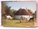 (13) - LA CAMARGUE - CABANE DE GUARDIANS - (CHEVAUX) - France