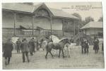 61 -MORTAGNE - Concours Des Juments Poulinières Percheronnes. La Présentation.               Cc28 - Mortagne Au Perche