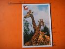 25) Parc Zoologique Cerza :hermival Les Vaux :lisieux : Girafes - Lisieux