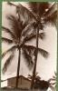 AFRIQUE. COMORE. MORONI. GRIMPADES DE COCOTIERS. Carte Dentelée. - Comores