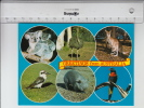Greetings From Australia (1984) Koala, Ostrich, Kangaroo, Kookaburra, Wombat, Rainbow Lorikeet - Australie