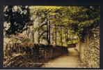 RB 828 - Frith Postcard The Groves Leading To Cathedral Brecon Wales - Breconshire