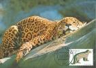 D05459 CARTE MAXIMUM CARD FD 2011 NETHERLANDS - JAGUAR - CP ORIGINAL - Big Cats (cats Of Prey)