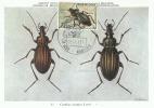 D05475 CARTE MAXIMUM CARD 1976 BELGIUM BEETLE CARABUS CP MUSEE ORIGINAL - Insecten