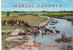 19734 Marais Vendeen, La Famille Canard, 31 AS Artaud OR 52 Canards