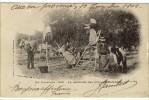 Carte Postale Ancienne Provence - La Cueillette Des Olives (l'Oulivado) - Agriculture - Autres Communes