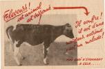 Agriculture/Elevage/Bovin S/Maladie/Varron/Vers 1950?                                      VP112 - Zonder Classificatie