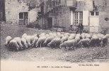 ¤¤  -     200    -    ASNAN   -   Le Retour Du Troupeau   -   Moutons    -  ¤¤ - France