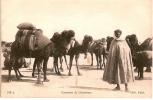CP/Algérie/Caravane De Chameaux/ Vers 1910?                                              B31 - Argelia