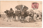CP/Algérie/Bassours/ 1906                                           B34 - Argelia