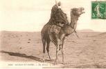 CP/Algérie/Un Méhari/ 1904                                           B36 - Argelia