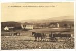 Carte Postale Ancienne Grangeneuve - Rentrée Des Betteraves Et épandage D'engrais - Agriculture, Chambon Sur Lignon - Le Chambon-sur-Lignon