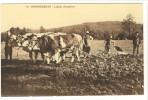 Carte Postale Ancienne Grangeneuve - Labour D'automne - Agriculture, Chambon Sur Lignon, Attelage à Boeufs - Le Chambon-sur-Lignon