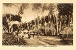 Village Aux Ile Wallis - New Caledonia