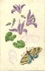 Carte Gauffrée Avec Collage D´un Papillon Près De Fleurs - Cartoline