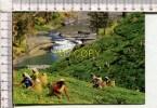 SRI LANKA -   Tea Plantation With  - Tea Pluckers - Sri Lanka (Ceylon)