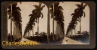 FIN 1800 VUE STEREOSCOPIQUE CUBA - HAVANA ROYAL PALMS AVENUE - PERFECT CONDITION! - Photos Stéréoscopiques