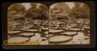 FIN 1800 VUE STEREOSCOPIQUE USA - POND OF NYMPHIA - COMO PARK - ST PAUL - PERFECT CONDITION! - Fotos Estereoscópicas