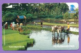 """Indo   """"  Persemaian Padi - Travaux En Rizière    """"  60 Units    ***    LUXE - Indonésie"""