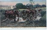 CPA Australie, Victoria, After The Day's Toil, A Victorian Farmer's Teams Chevaux, Pferd, Horse, Caballo, Cavallo, Paard - Australie