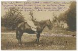 Real Photo Russian Peasant Woman On Horse   Postally Used Odessa Ukrania 1905 - Ukraine