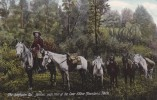 """CPA - (Etats-Unis) Coeur D'Alene Mountains - """"the Swiftwater Liz"""", Famous Pack Train - Coeur D'Alene"""