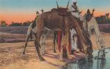 Au Bords De L'Oued. - A.D.I.A. N° 8078. Colorisée. - Scènes & Types