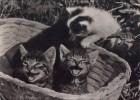 AK Katze, Mietzekatze, Stubentiger... (DDR 1965) - Cats
