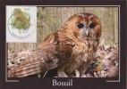 BELGIUM 2009 Max Card With Tawny Owl. - 1985-.. Vogels (Buzin)