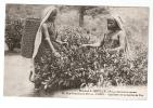 CPA - Ceylan ( + Paris ) 75 - Maison Quillé Et Fils Importateur Thé Cuillette (  Jeunes Femmes Costume Traditionnel) - Sri Lanka (Ceylon)