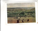 B54699 Moldova Sheep Mutons Used Perfect Shape - Moldavie