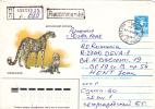Cheetah, GUEPARD, 1985, REGISTERED, POSTAL COVER STATIONARY, RUSSIA - Felini