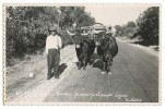 ALGARVE SILVES - Carro Transportando Água (Custódio, Nº 94) Carte Postale - Faro