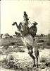 En Camargue Avec Les GARDIANS N° 13200-45-Sur Les Bords Du Rh Vivent En Liberté...Après La Capture Le Dressage - France